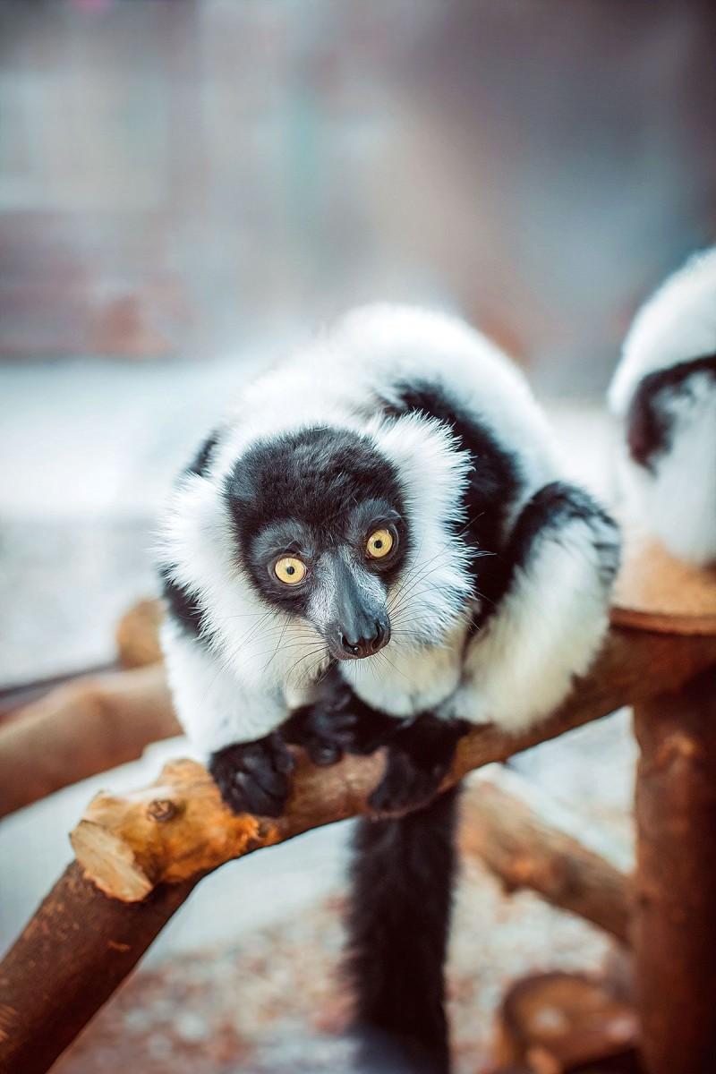 Контактный зоопарк «Animal park»