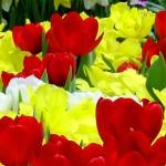 Сеть цветочных магазинов «ГранПри»