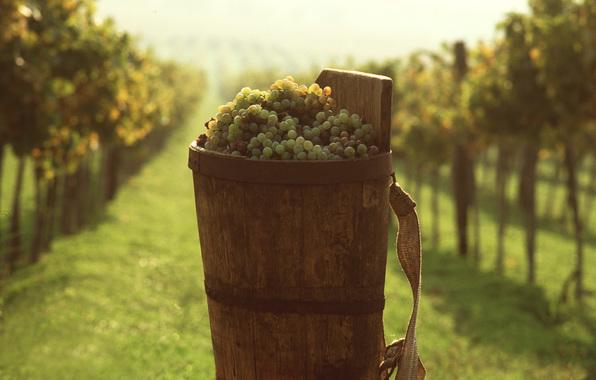 Фестиваль вина в Киеве