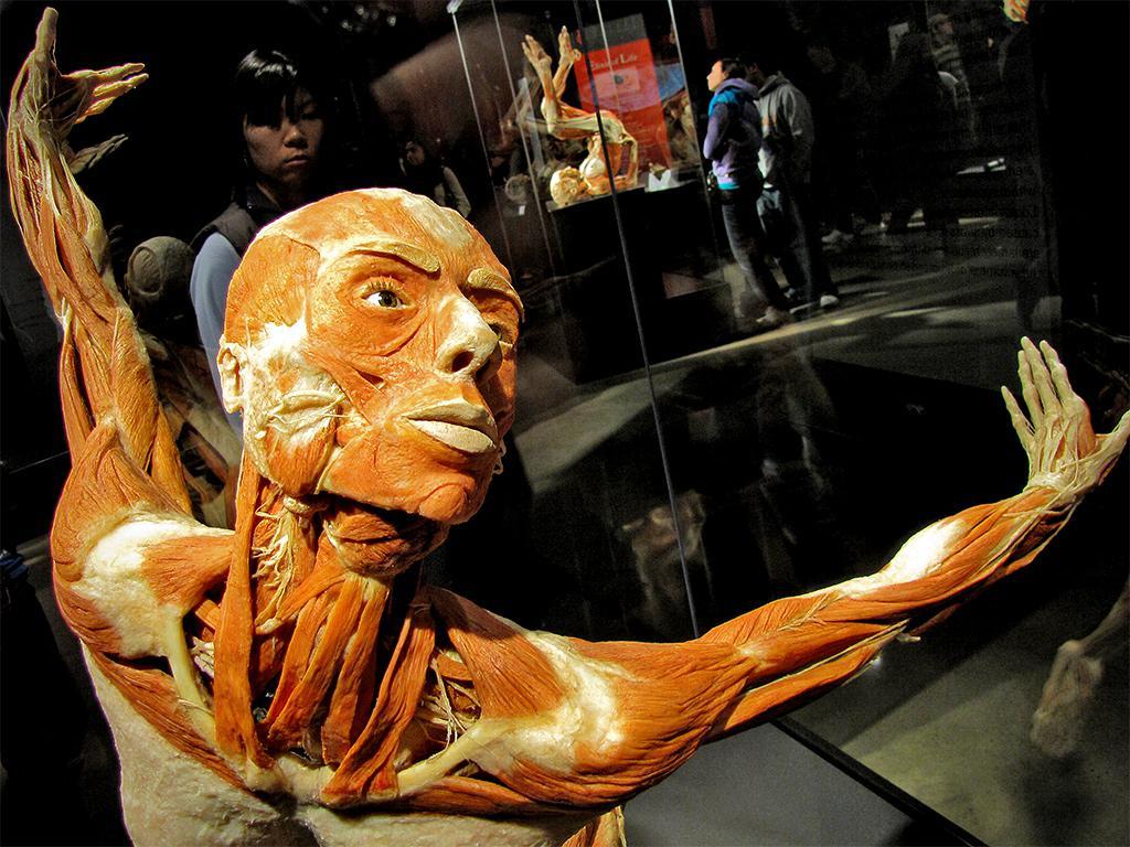 Выставка «Тело Человека»